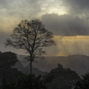 Dwars door Suriname, de natuur